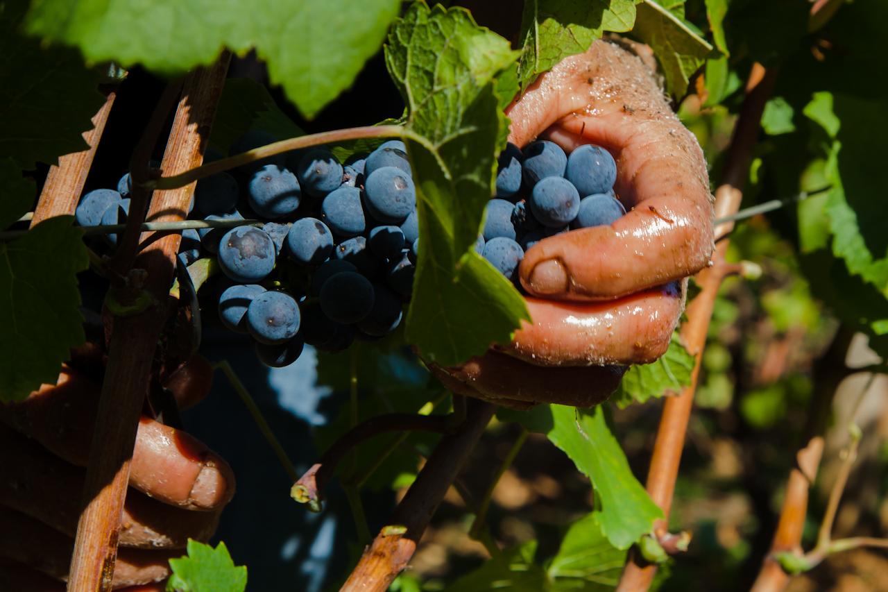 Les 10 crus du Beaujolais